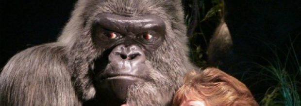 Slain Gorilla to be Stuffed and Returned to Zoo Enclosure After Massive Public Outcry